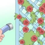 locksmith hastings roses on trellis