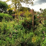 locksmith high-wycombe overgrown garden security risk